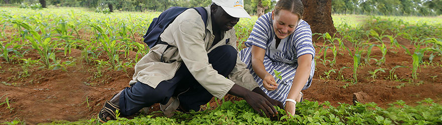 A man and a woman crouching to examine crop growing in a field. © ACDI-CIDA/Roger LeMoyne