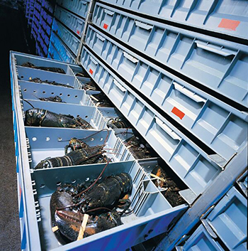 Special storage facilities for lobsters
